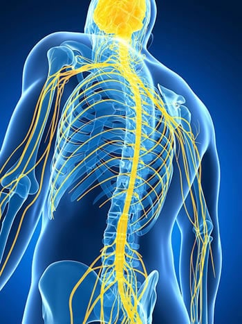 How to Treat a Pinched Nerve with Chiropractic Care – Our Guide